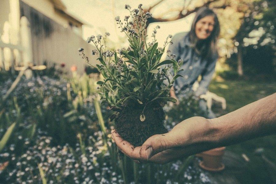 planting-865294_1280