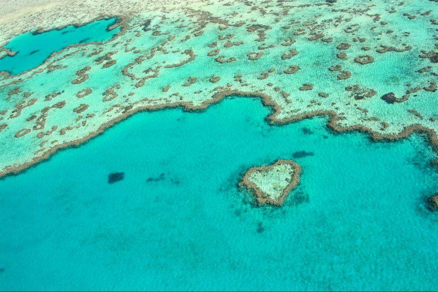 Australia mare