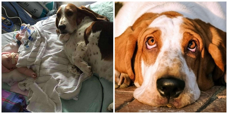 Bimba colpita da ictus e i suoi due cani restano con lei fino alla fine (video)