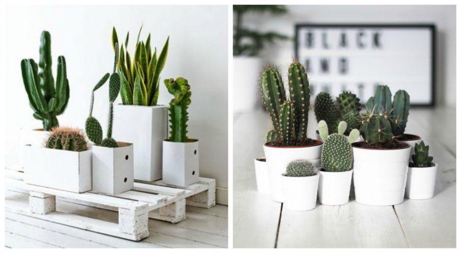 Arredare con le piante grasse vasi di design tutorial e for Portavasi da interno