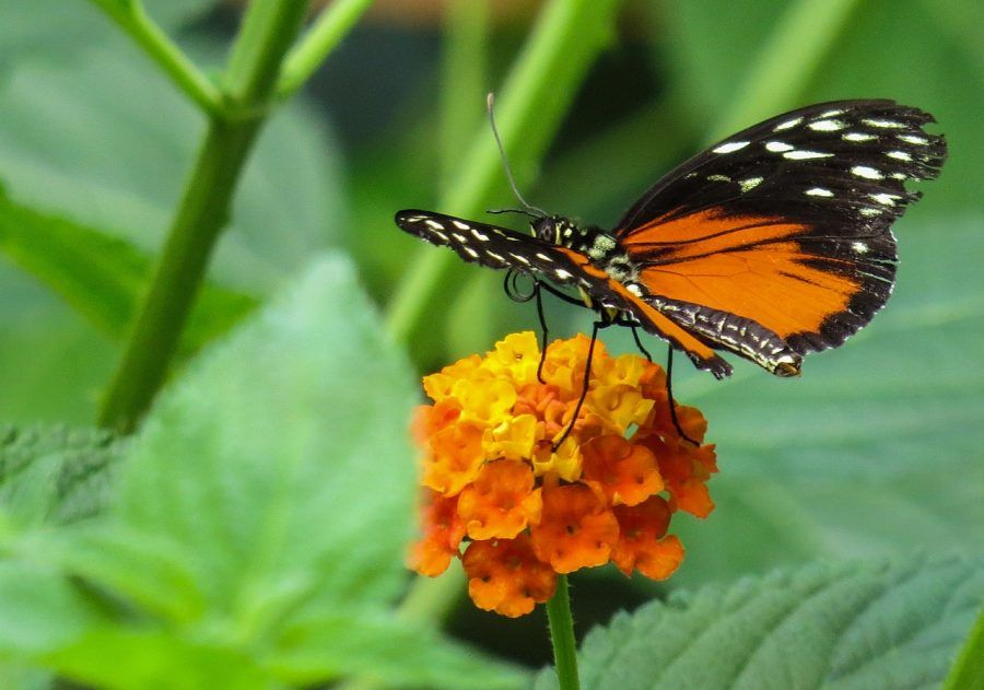 butterfly-854342_1280