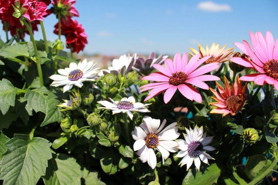 flowers-1368225_1280