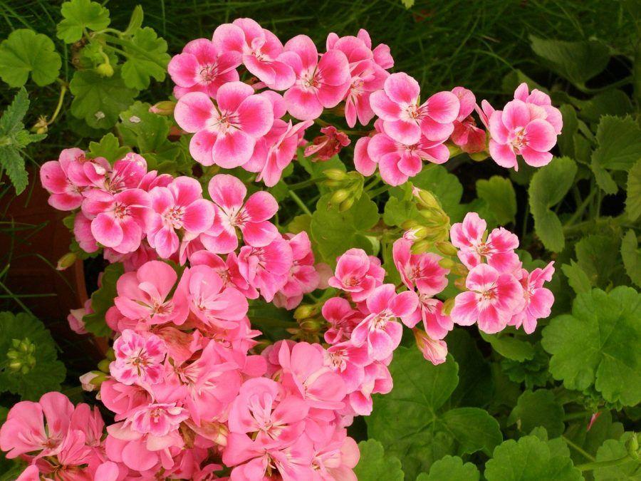 flowers-260937_1280