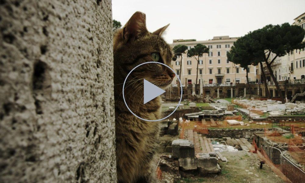 gatti-roma