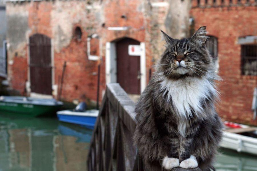 gatti-venezia