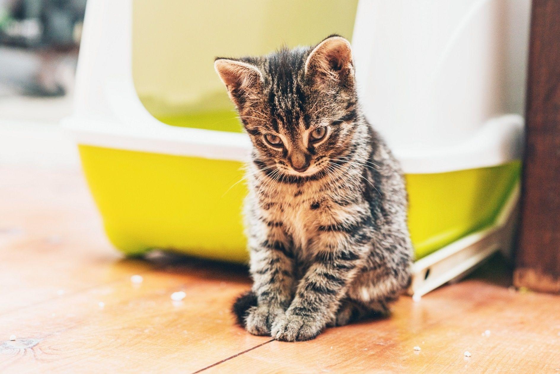 Costruire Lettiera Per Gatti soluzioni creative per nascondere la lettiera dei gatti