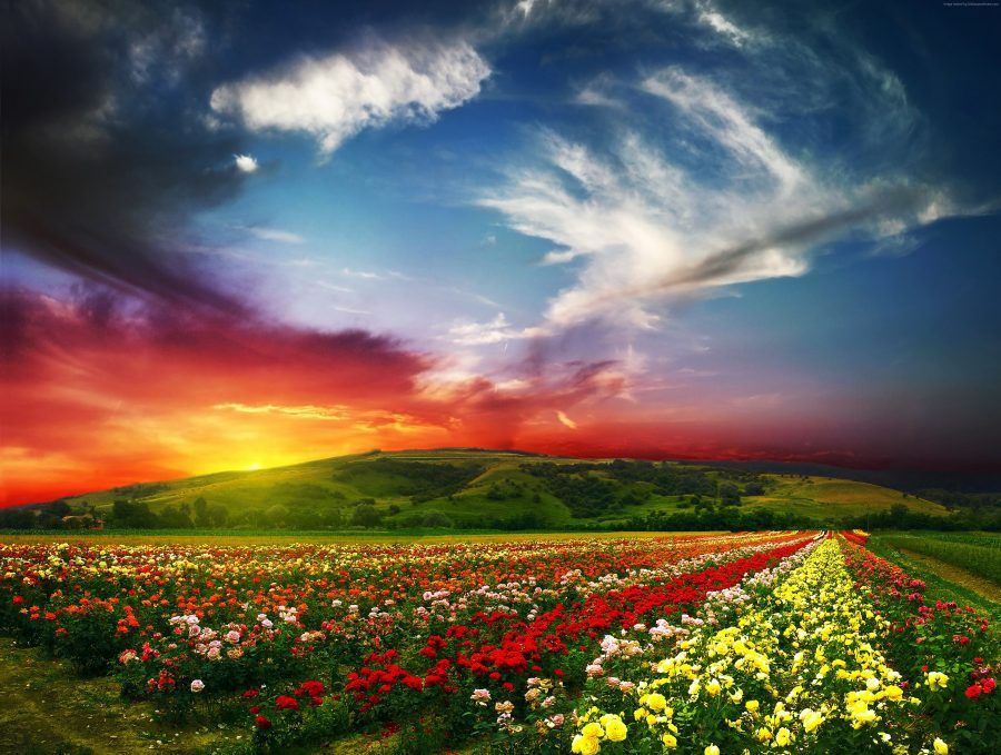 india-4200x3169-valley-of-flowers-meadows-roses-sunset-clouds-5310