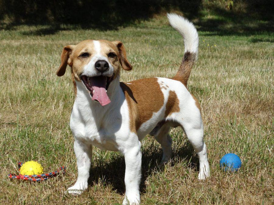 Ama Dog Rescue