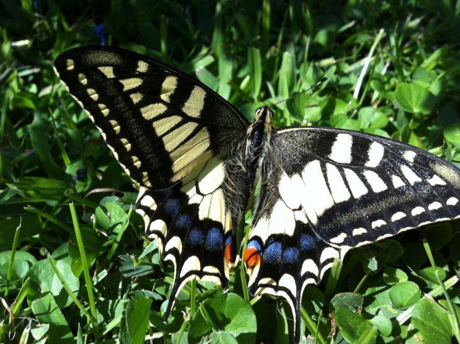 kit-farfalle1