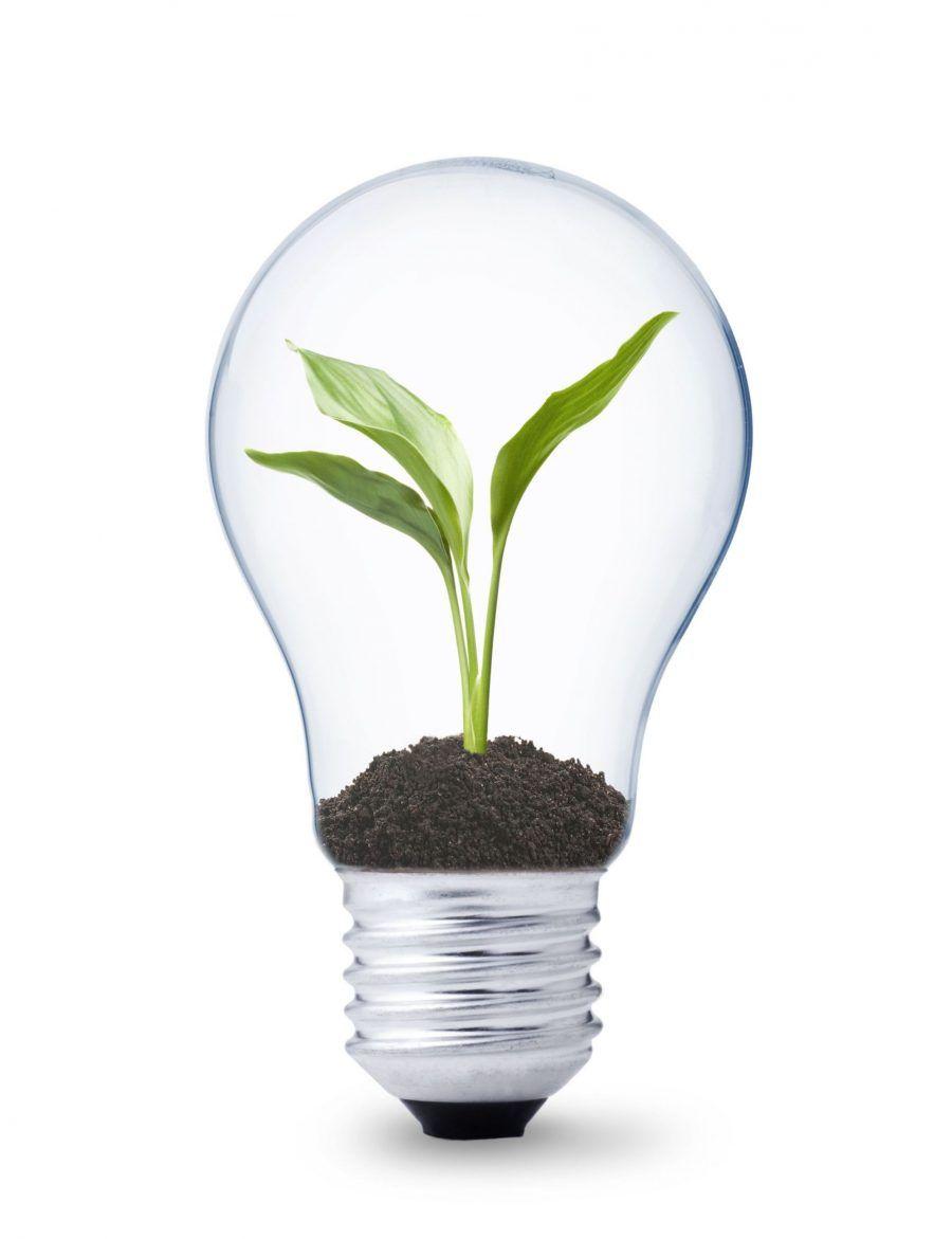 Perché dovremmo usare solo lampadine LED  Bigodino