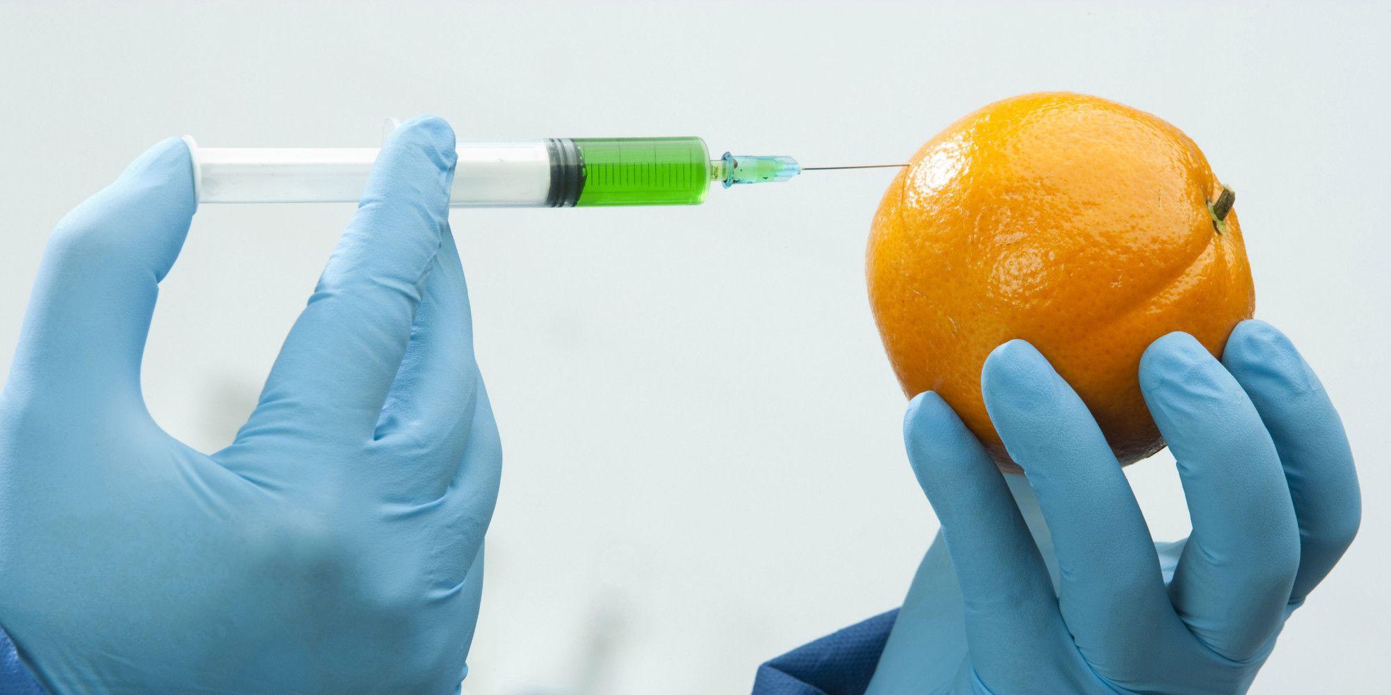 OGM, pro e contro da sapere sugli organismi geneticamente modificati