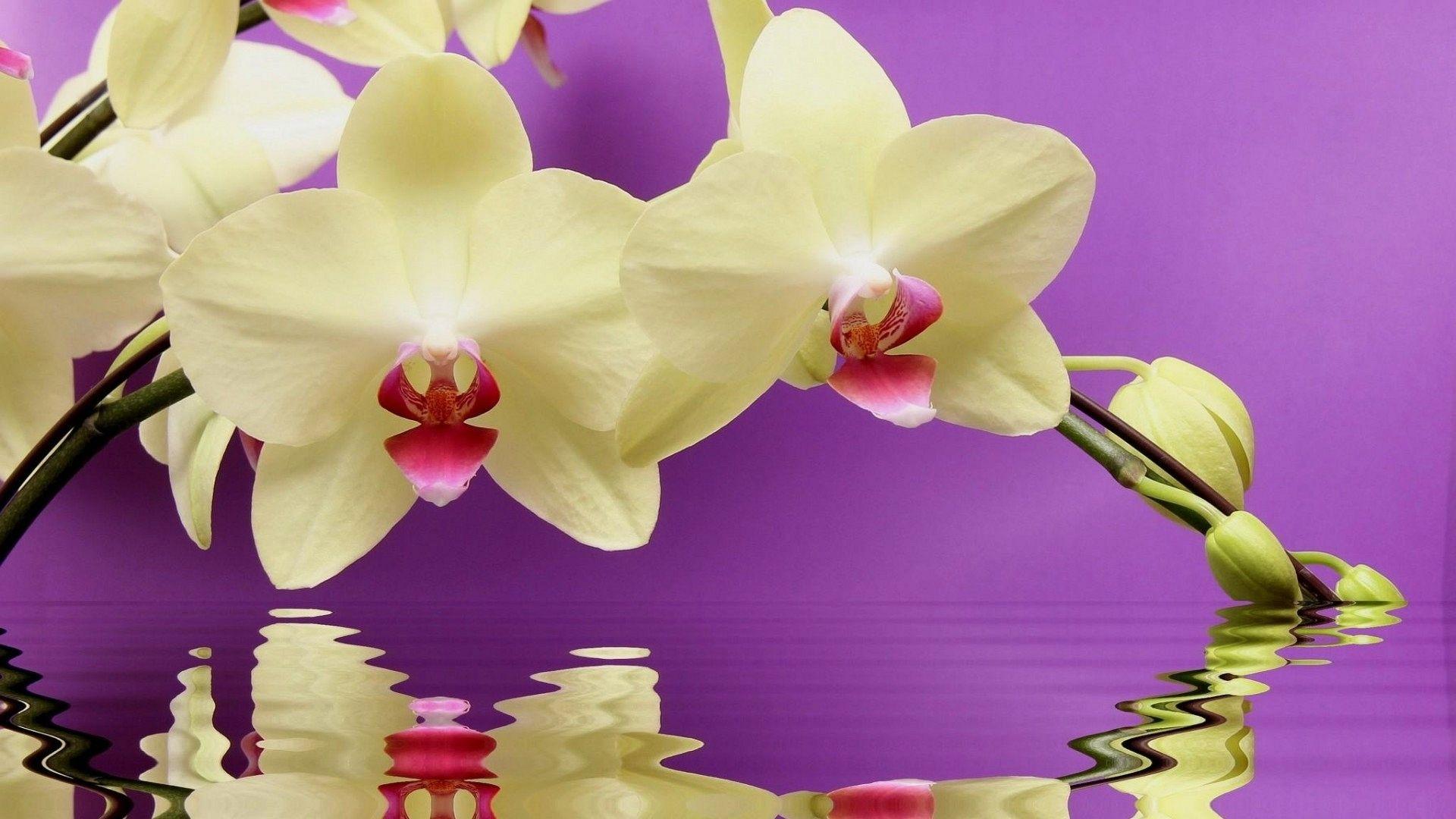 Sala Da Bagno Pianta : Quali piante usare per arredare il bagno bigodino