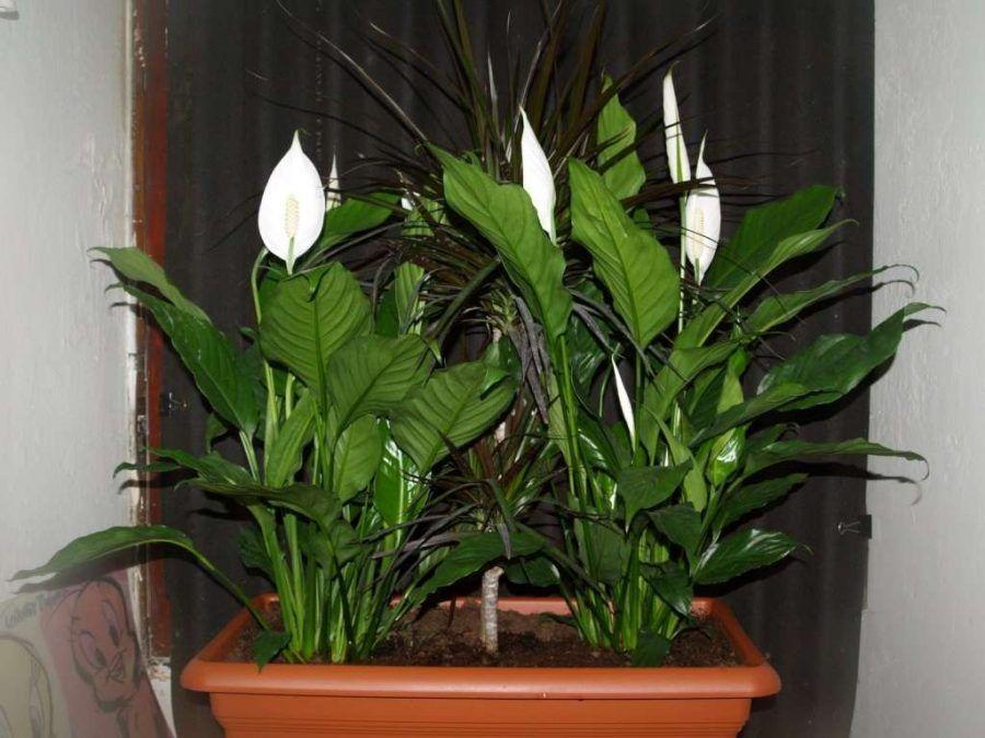 Quali piante usare per arredare il bagno bigodino - Piante per il bagno ...