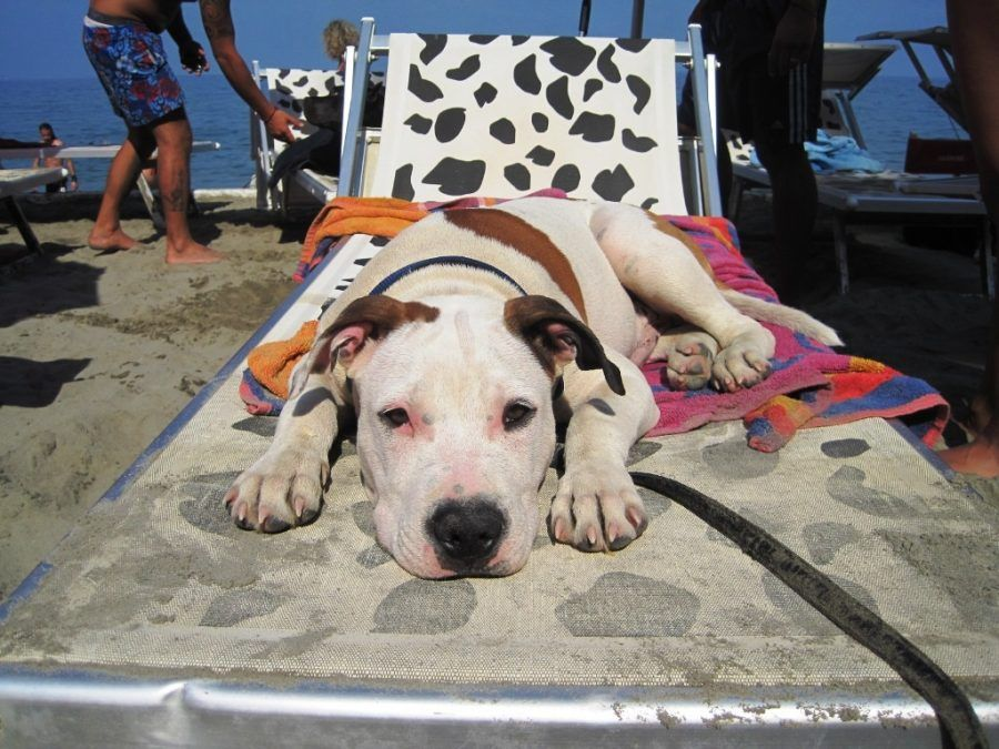 In vacanza con i cani: le 10 migliori spiagge pet friendly in Italia ...