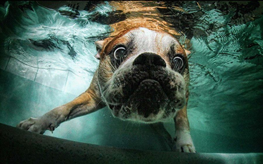 cane-piscina1