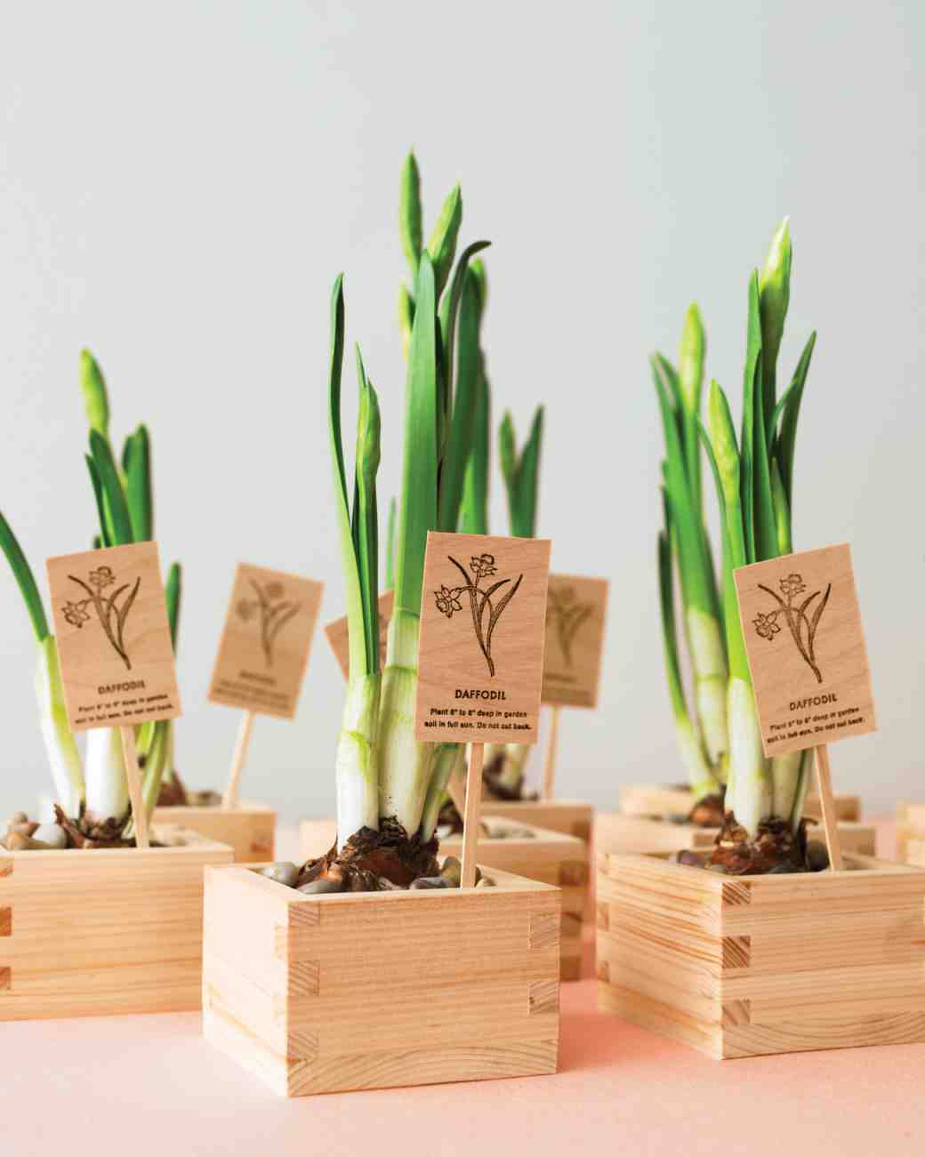 diy-floral-favors-daffodils-in-sake-cups-sp10-0615_vert