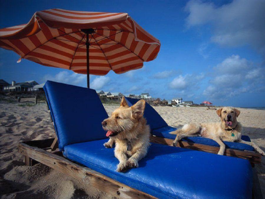 dog-beach-san-vincenzo