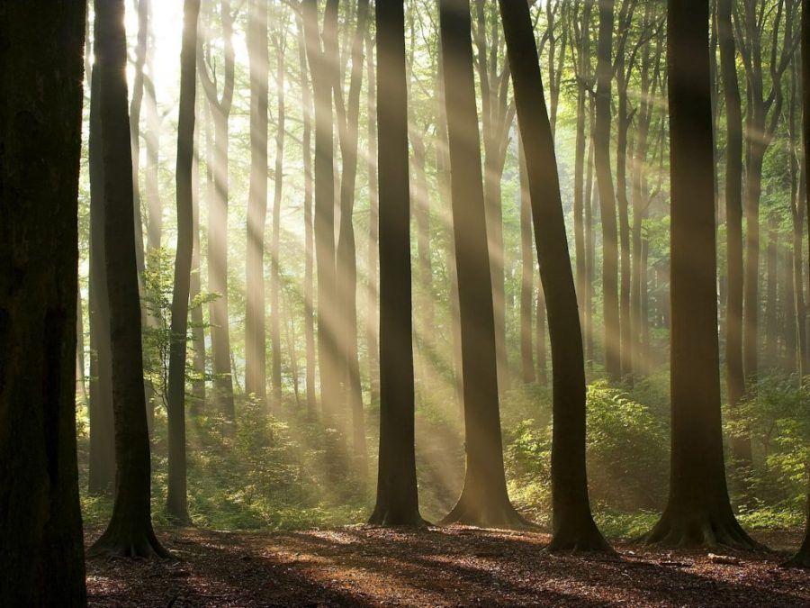 I boschi dei Celti