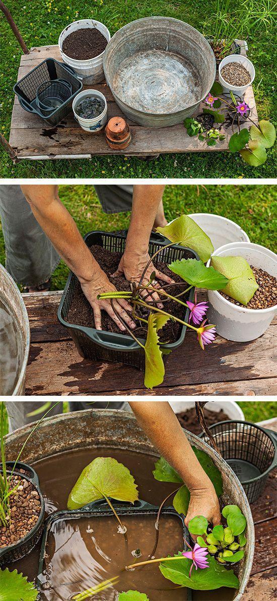 Diy Costruire Un Mini Giardino Acquatico Bigodino