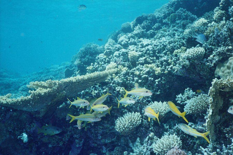 Gifun Island Hurghada