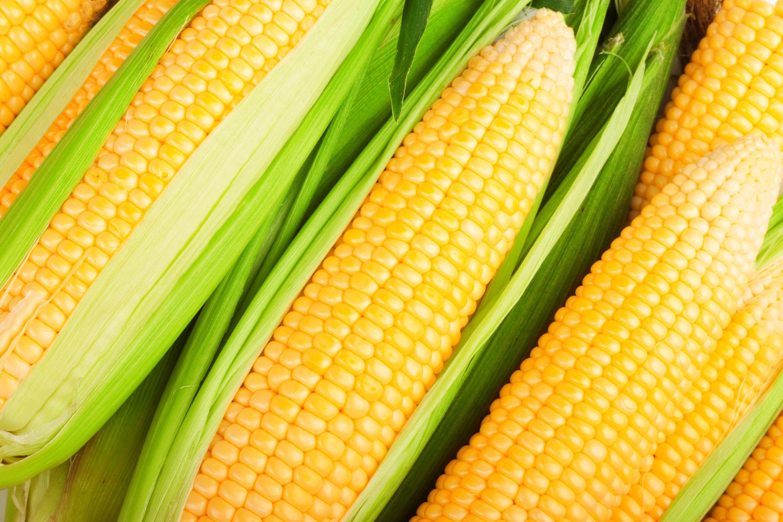Perchè il mais aiuta l'assorbimento del calcio nelle ossa
