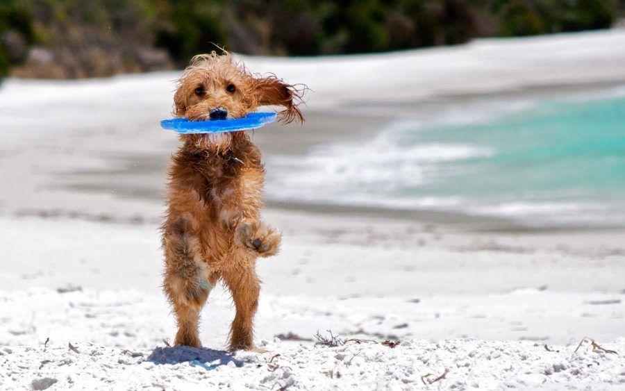 Proteggete i vostri cani al mare