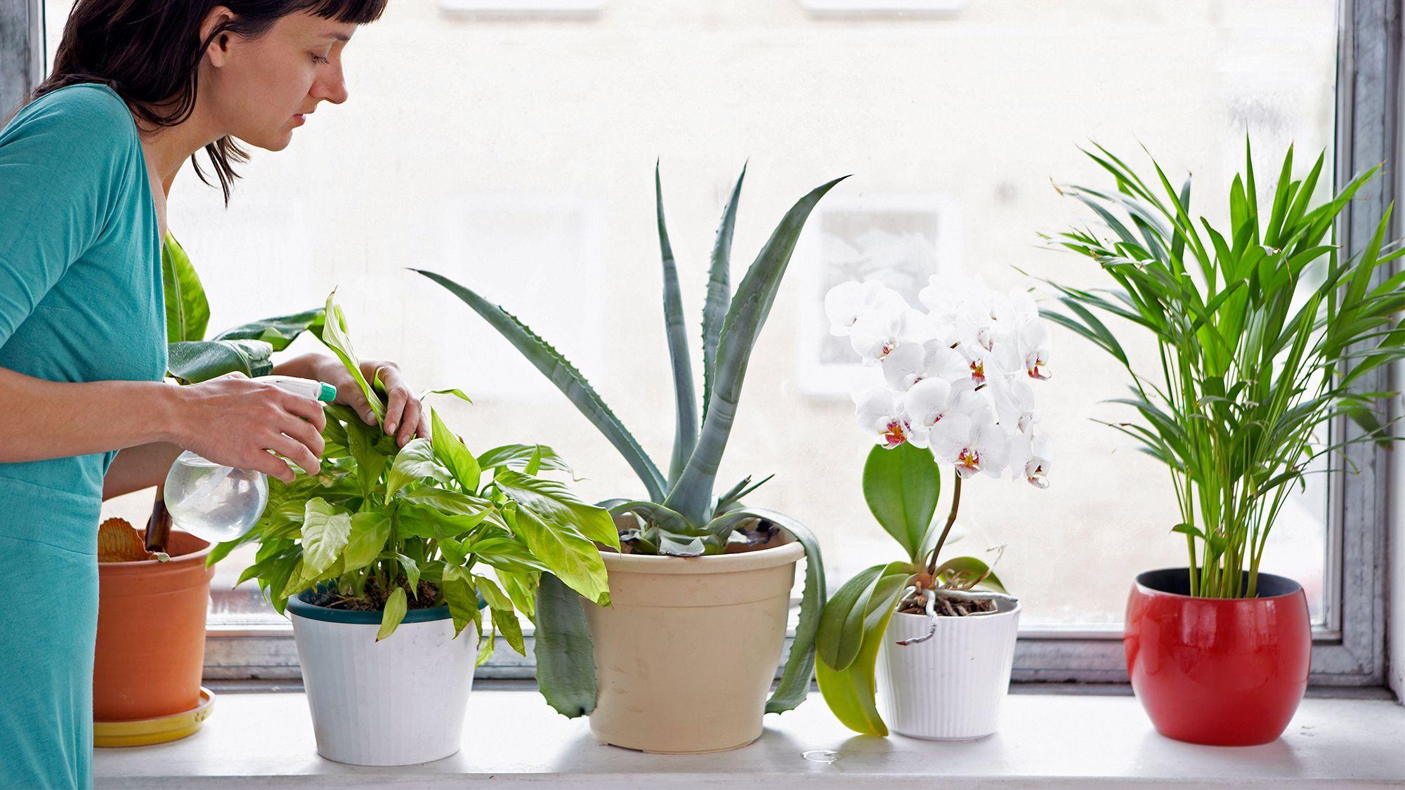 Bagnare Piante Con Bottiglie come innaffiare le piante quando sei in vacanza | bigodino