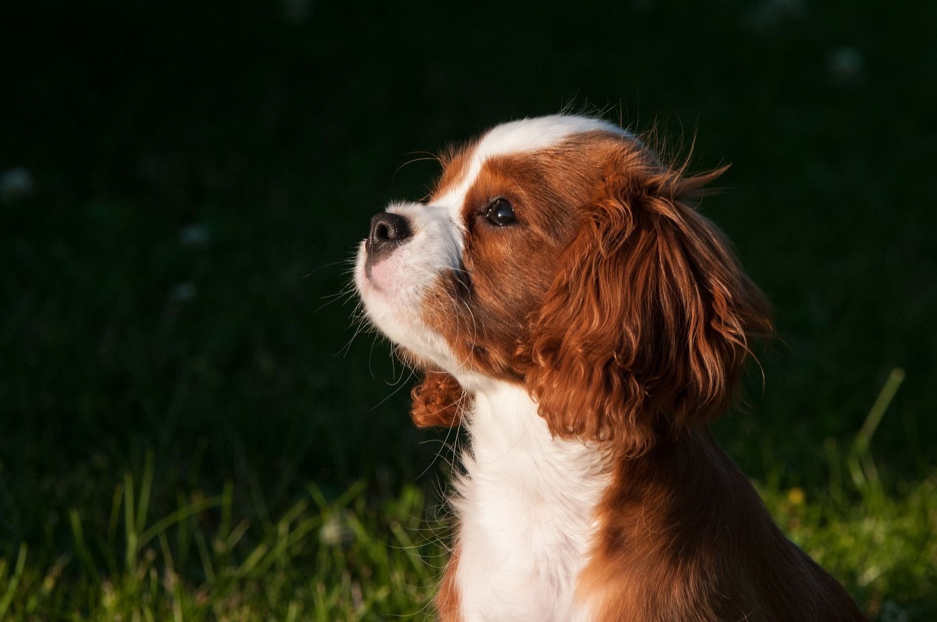 dog_sitter_copertina