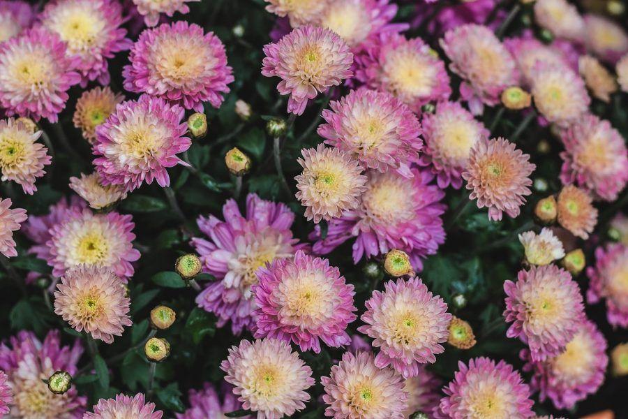 flowers-1031669_1280