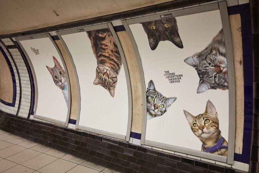 Invasione di gatti a Londra...