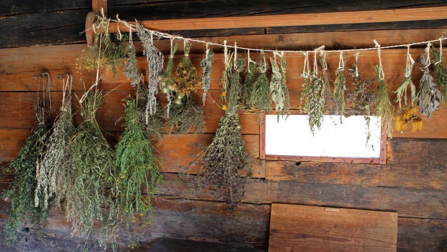i mazzetti di erbe aromatiche appesi ad essiccare