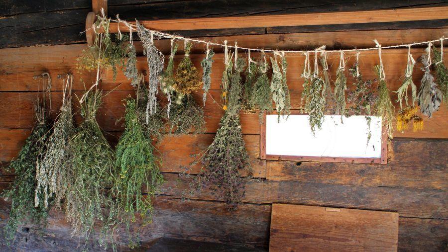 herbs-478060_1920