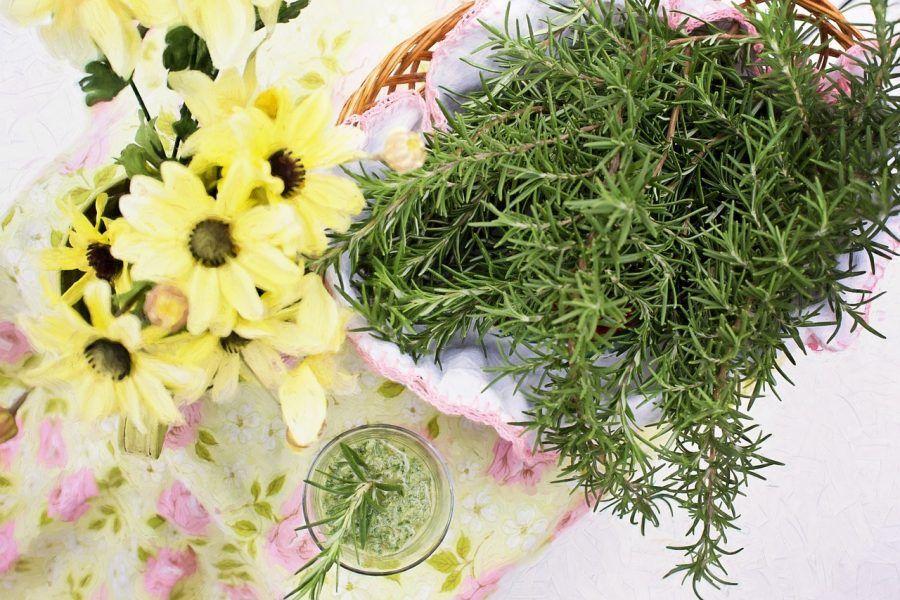 rosemary-erba aromatica