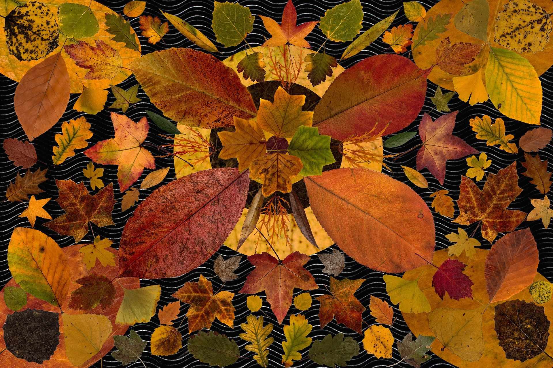 DIY d'autunno: tante decorazioni con le foglie