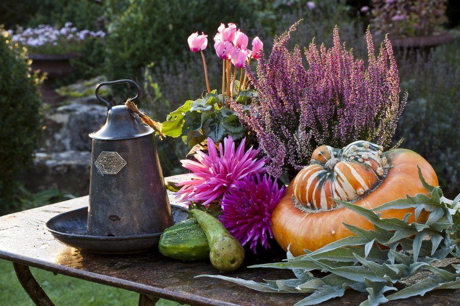 ciclamini, crisantemi, erica e zucca