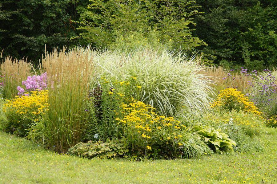Scopri la leggerezza in giardino con le graminacee for Giardini ornamentali