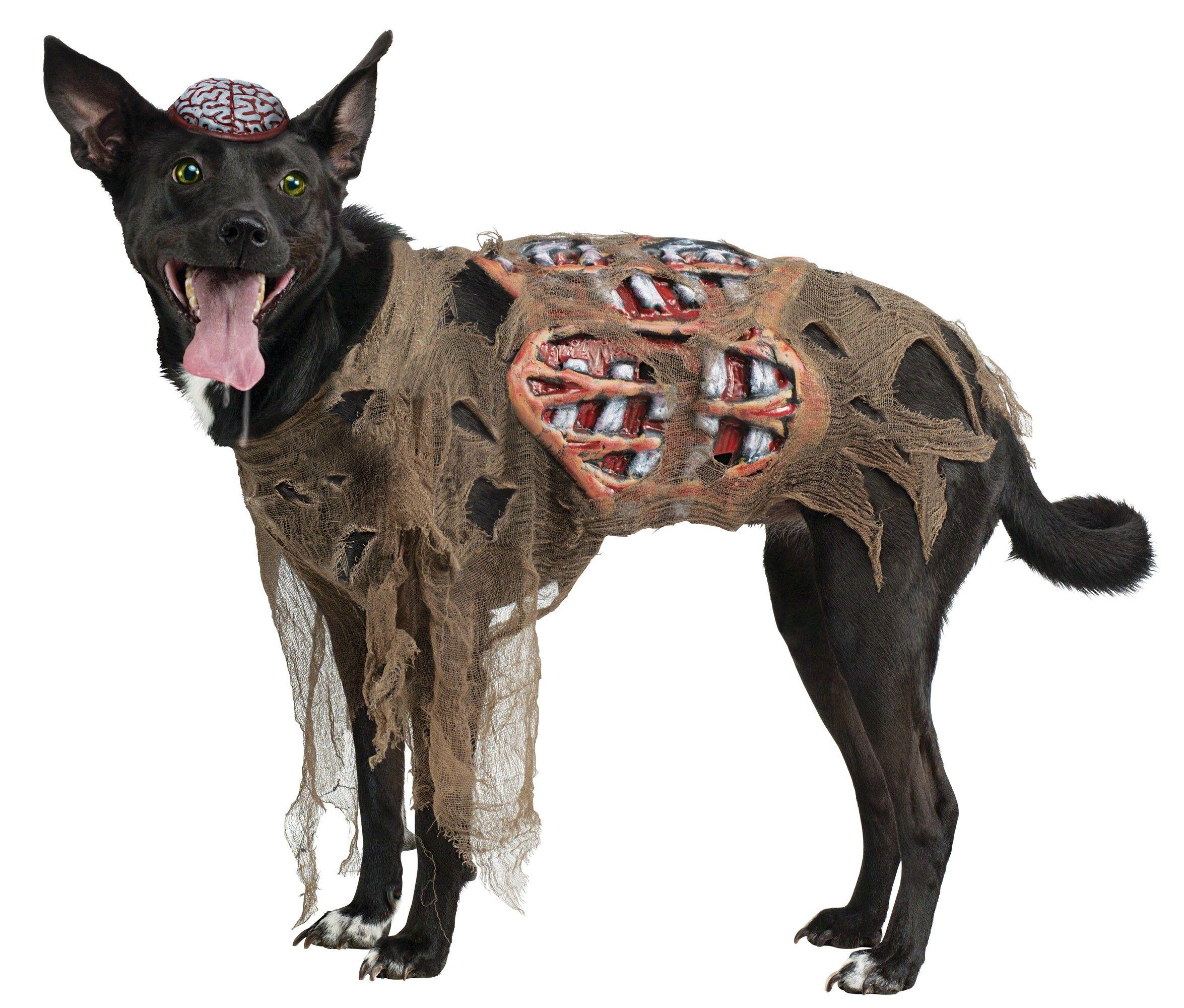 Costume halloween cane scheletro