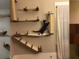 Cat-Mod-gatti