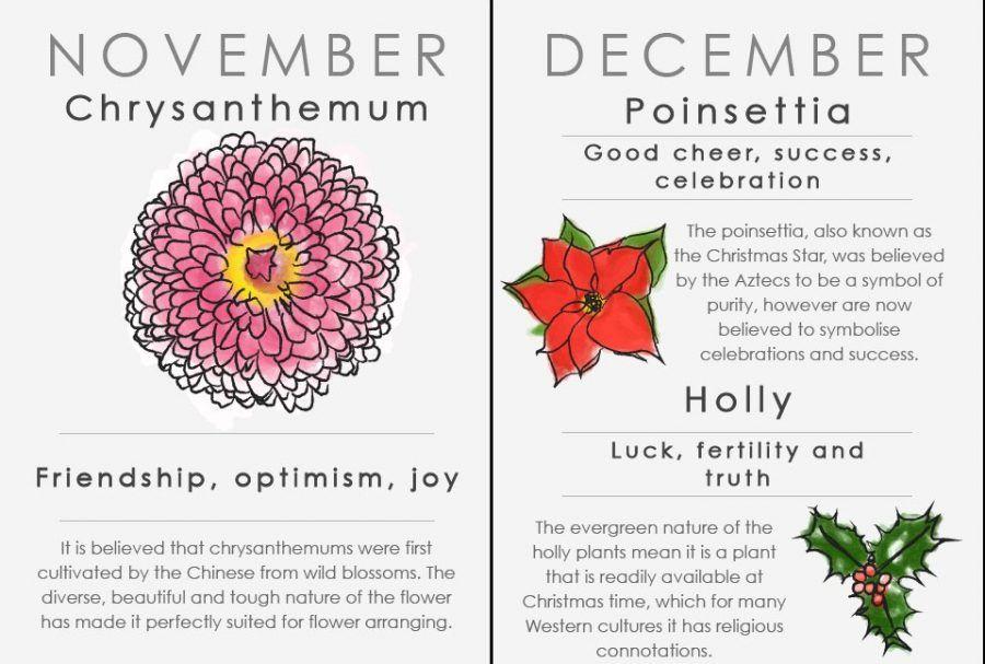 Oroscopo floreale: novembre e dicembre