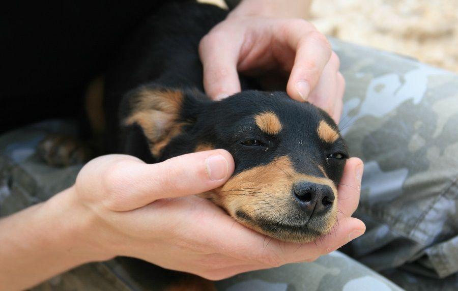 Un cane con il suo proprietario
