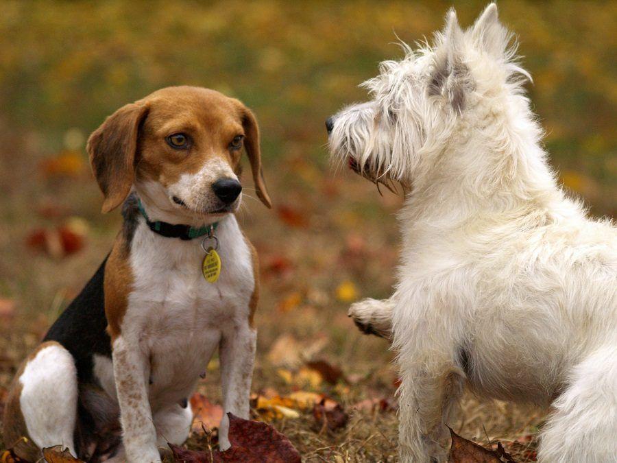 L'incontro fra due cani