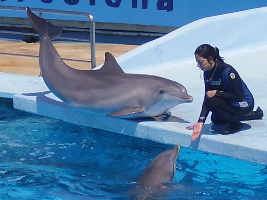 Delfini con la loro allenatrice