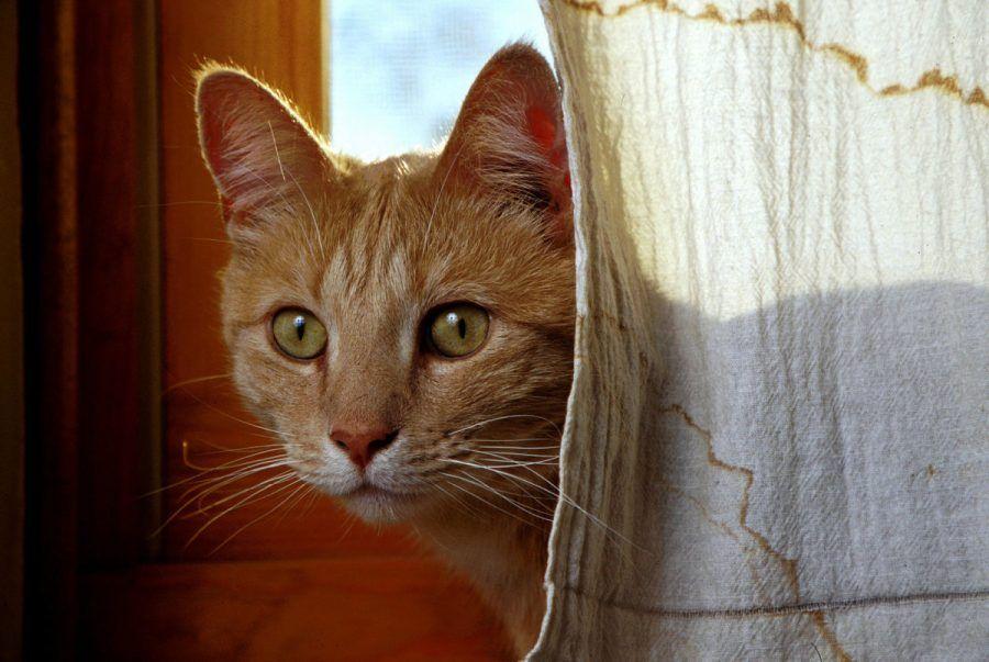 L'Isis vuole sterminare tutti i gatti nel Califfato