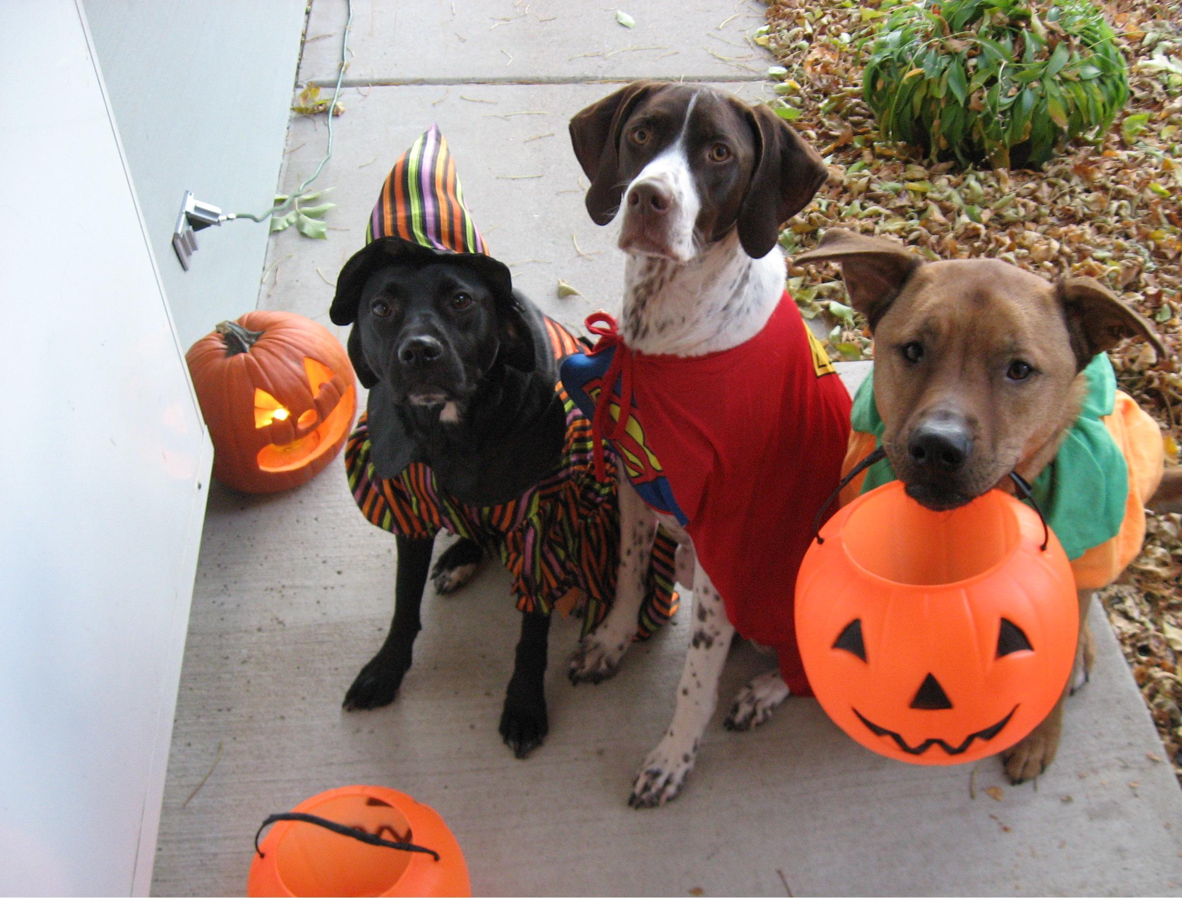 costume halloween cani