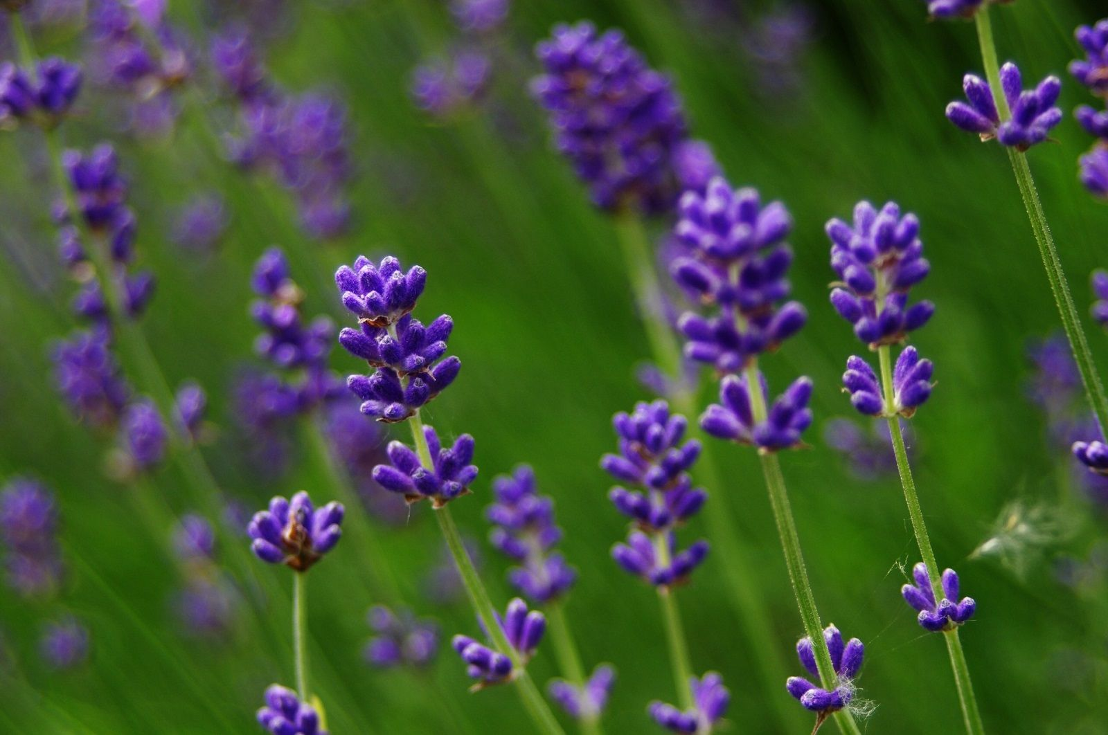 5 oli essenziali per combattere l'acne