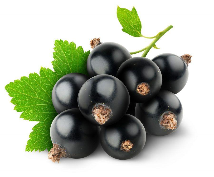 ribes nero un antiossidante naturale, utile anche per la circolazione sanguigna
