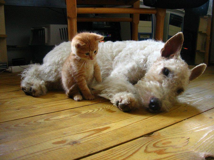 Niente panettone con uvetta a cani e gatti