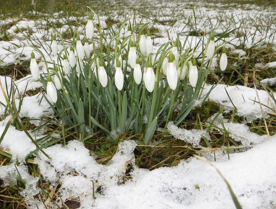 Fiori, tronco e radici possono essere danneggiati dal freddo dell'inverno