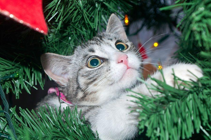 Cosa non dovevo fare con l'albero di Natale?