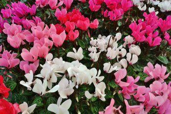 Le piante che colorano l'inverno